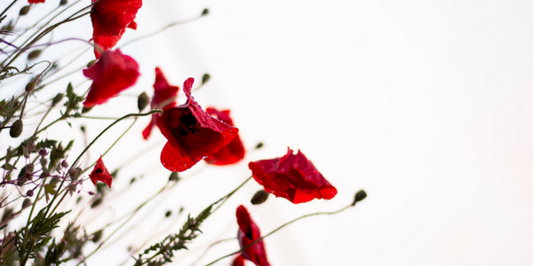Anzac Day blog banner