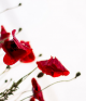 Anzac Day blog banner